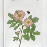 Emma Sjödin Tea Towel Wild Rose